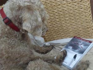 dog book 2