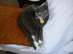 Earl Grey curled on her fav chair