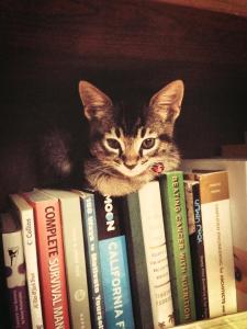 Home and claimed the bookshelf as his bed