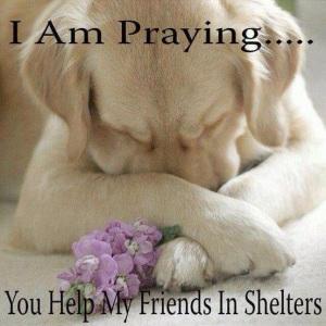 praying for help
