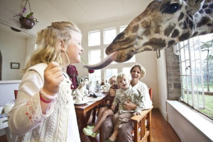 GiraffeManor06