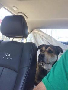 GERALDINE'S freedom ride. Looking a little scared.