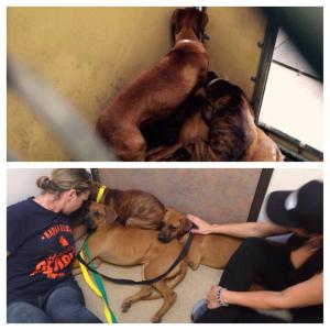Terrified Boxer family rescued by Karma rescue