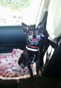 Little senior pepe rescued from Baldwin Shelter and check out that smiling face.