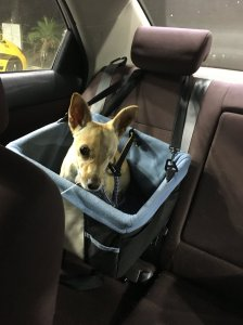 One eyed Lillith's freedom ride
