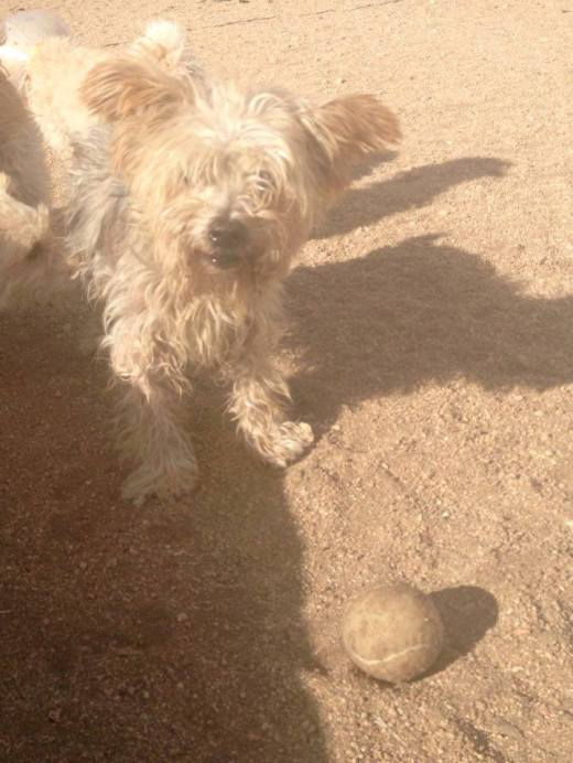 Bowie 8 y:o happy at the beach with his new family and ball