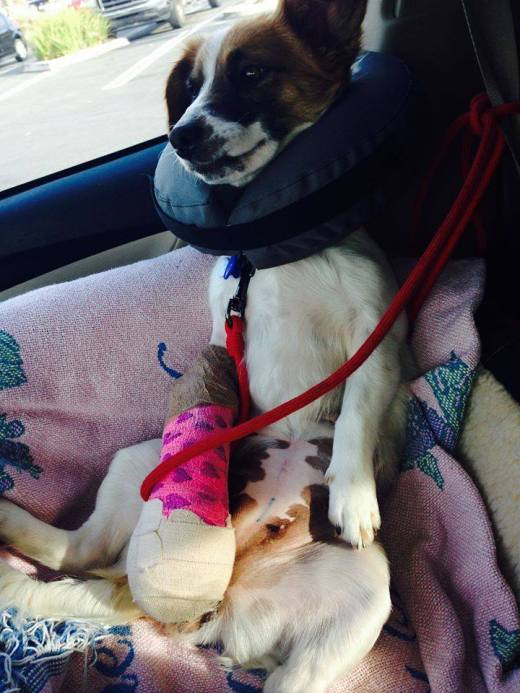 Dinah with the broken arm was rescued and is happily healing. Her freedom photo.