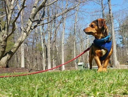 Louie the terrier's freedome photo.jpg