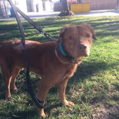 Neo's been rescued from the Downey Shelter.jpg