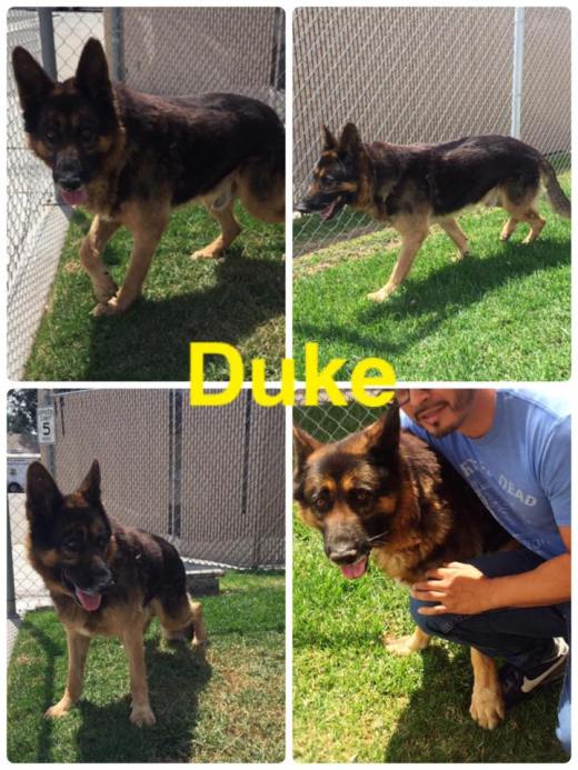 Duke's been rescued