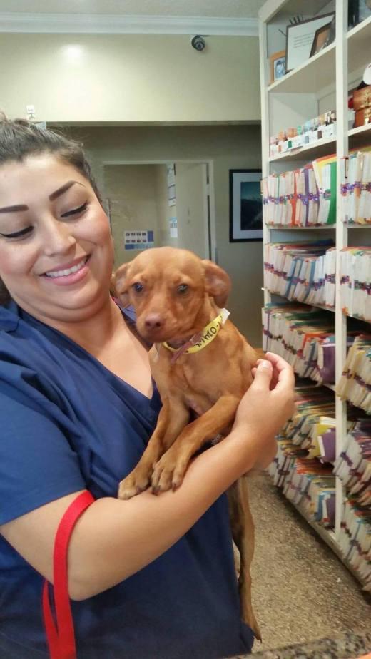Savannah's vet check.jpg