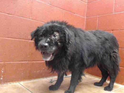 Turk- 2 y:o mail chow's been rescued