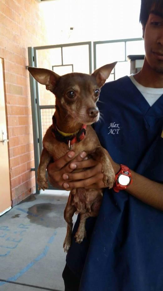 Dahlia's been rescued..jpg