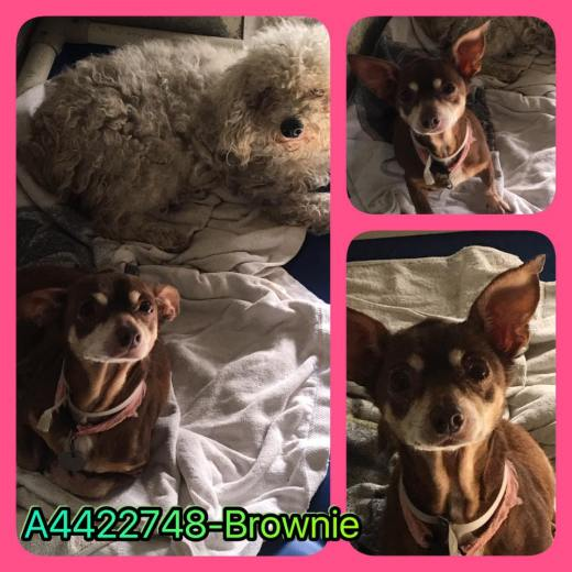 Brownie's been rescued.jpg