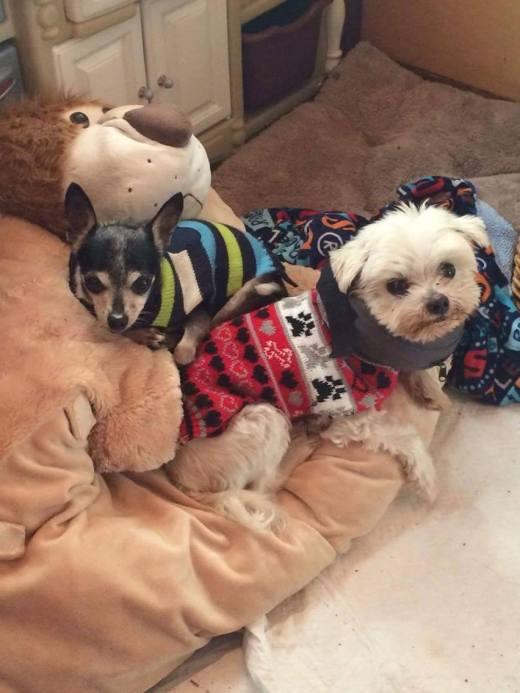 Stashia with new sibling.jpg