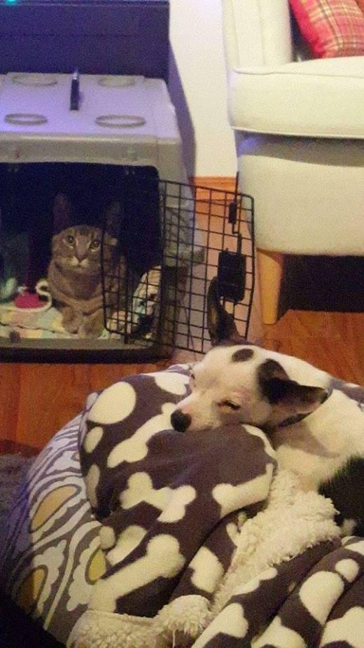 huey-snuggling-close-to-new-sibling