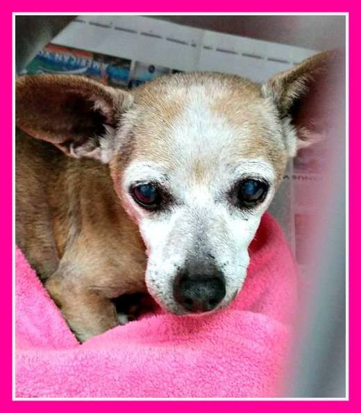 Kazzy's the senior been rescued.jpg