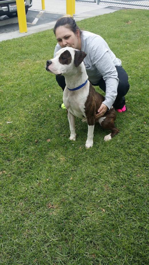 patches-proud-and-tall-leaving-the-shelter
