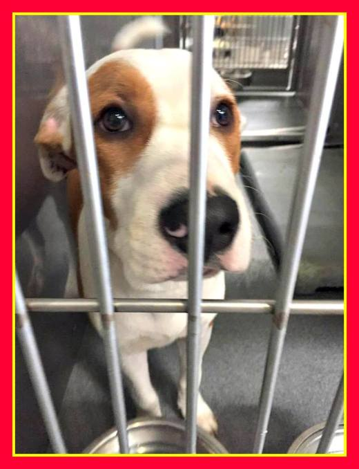 spencers-been-rescued