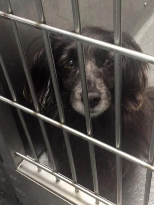 black-male-spaniel-mix-17-13429-downey-shelter-has-been-freed-call-him-blacky
