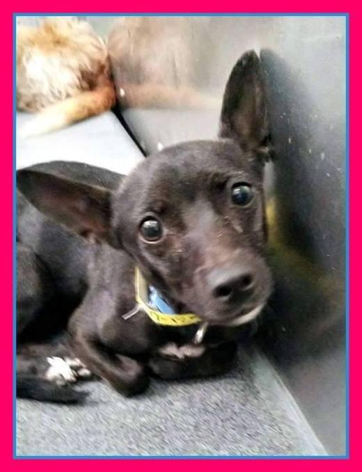 debbie-now-ebony-has-been-rescued