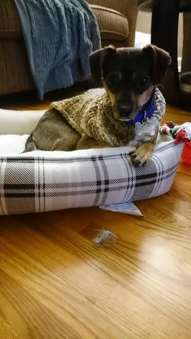 eleanor-now-nora-cozy-in-new-bed
