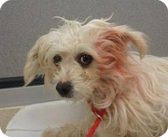 gypsy-163382-has-been-rescued