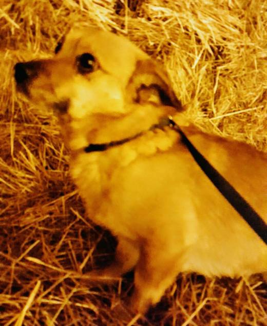 MIKEY originally KATO on facebook shelter photo playing in the hay in new home.jpg