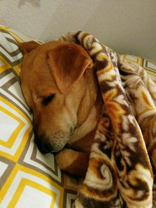 SHASTA now TACO safe and sound in new bed.jpg