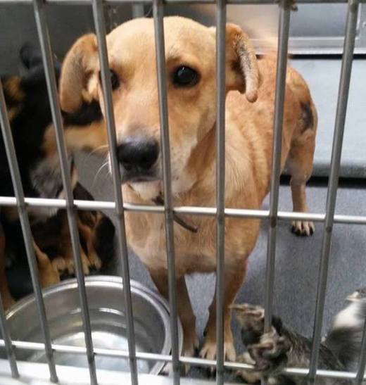 SHASTA now TACO's been rescued.jpg