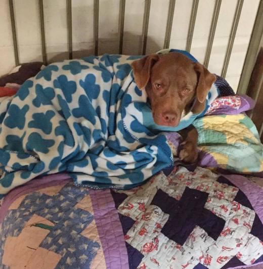 warren-aks-canelo-snuggled-in-new-bed