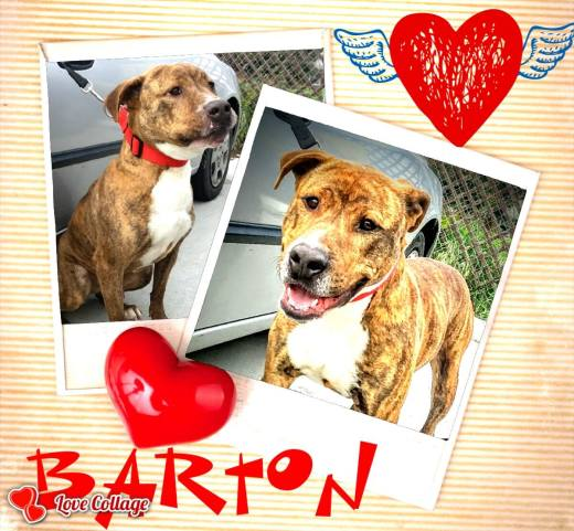 bartons-thank-you-for-saving-my-life-collage-card