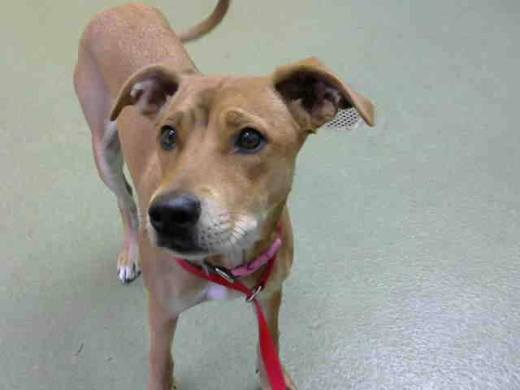 cinnamon-2-id-a661613-from-devore-has-been-rescued