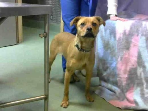 leah-a664575-has-been-rescued