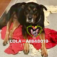 Lola has been rescued.jpg