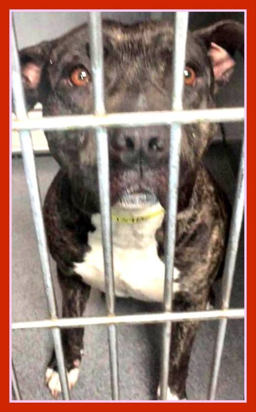 maui-has-been-rescued