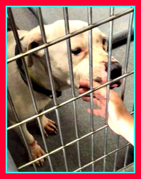 patches-2-has-been-rescued