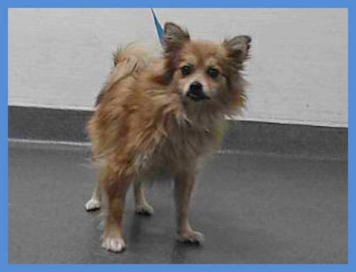 pom-17-14888-female-has-been-rescued