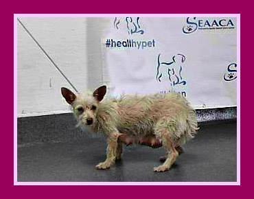 priscilla-has-been-rescued
