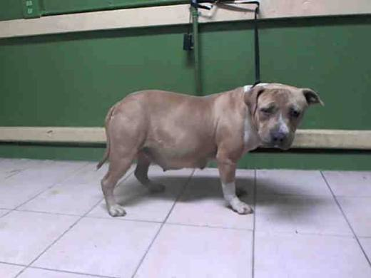 verina-pregnant-has-been-rescued