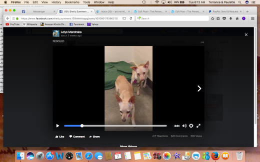 BONDED CHI SISTERS bonded Chi sisters ID#I1267749:#I1267751 RESCUED TOGETHER Screen Shot 2017-03-07 at 6.13.40 AM