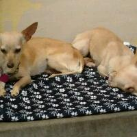 Bonded chi sisters shelter promo