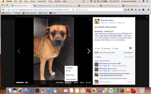 BRONSON HAS BEEN RESCUED Screen Shot 2017-03-09 at 5.30.01 PM