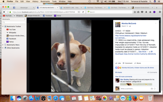 CHICO HAS BEEN RESCUED