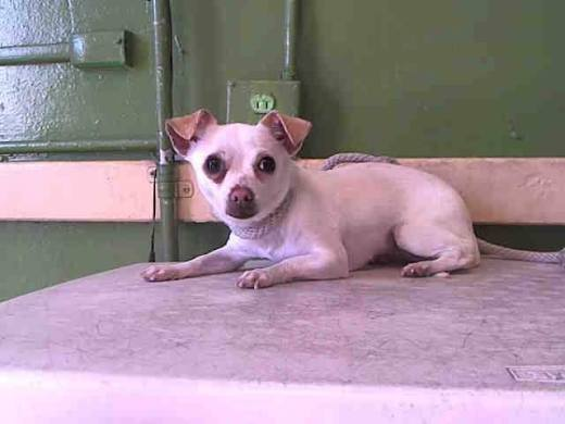 KACIE HAS BEEN RESCUED #A5037019 My name is KACIE