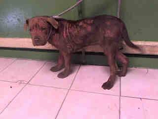 liana-has-been-rescued-and-treated-for-mange-at-vet