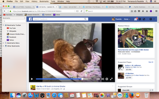 MOLLY & CHOCOLATE BFFs RESCUED Screen Shot 2017-03-24 at 4.27.59 PM