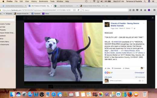 WILLIE now BILLY RESCUED Screen Shot 2017-03-22 at 6.57.07 AM