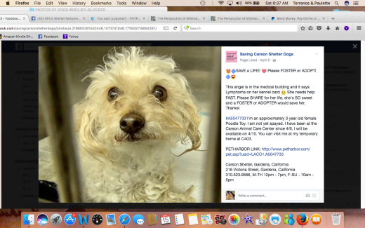 LEESA #A5047733 RESCUED Screen Shot 2017-04-15 at 6.37.12 AM