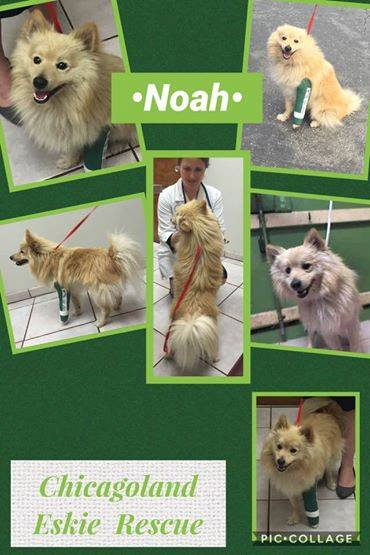 NOAH #A5047956 FREEDOM PHOTO WAS JACKSON PER RESCUE